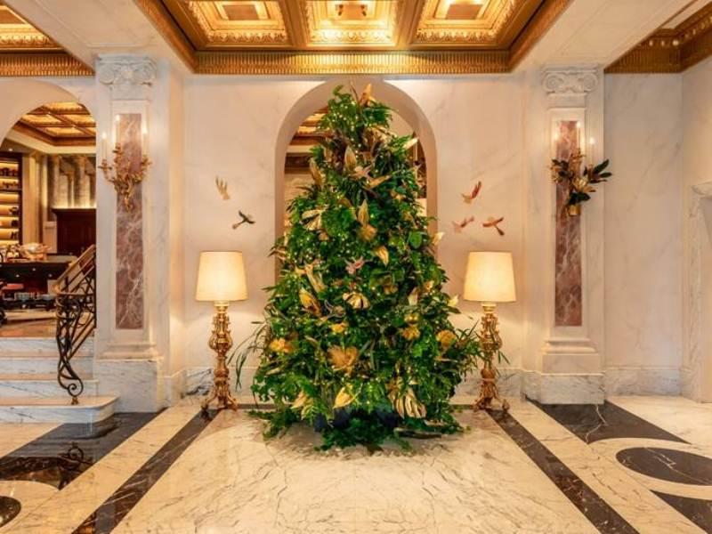 Chez Dédé projeta a árvore de Natal  do Hotel Eden