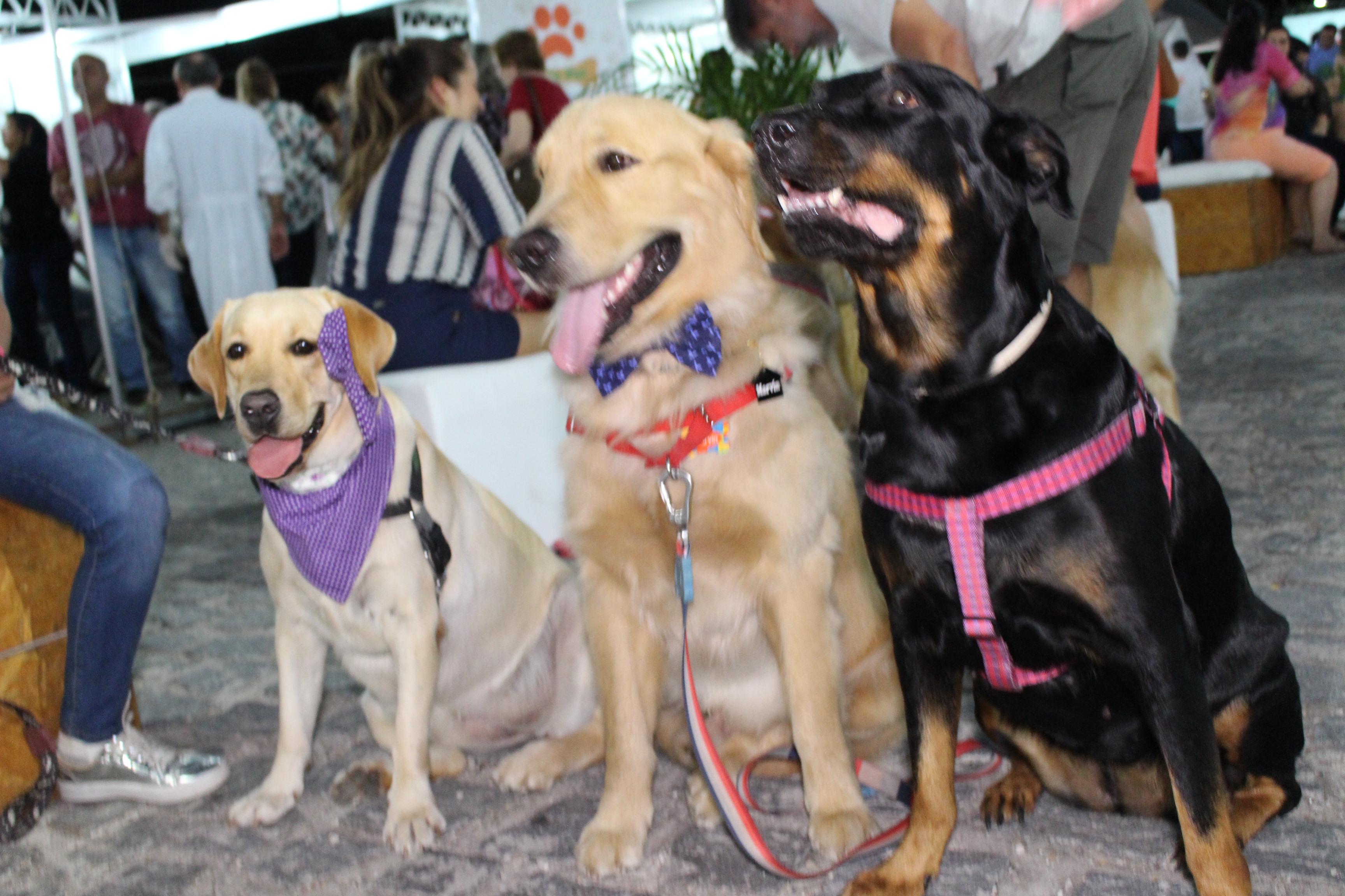 Vila Pet chega ao Iguatemi com serviços e atrações para animais de estimação