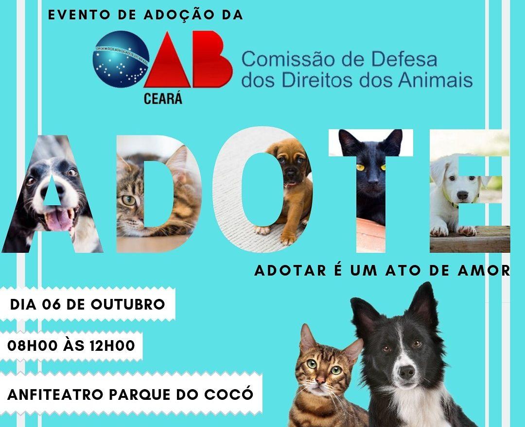 OAB do Ceará promove feira para adoção de cães e gatos